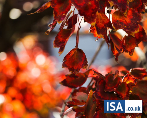 Our Top ISA Picks for November