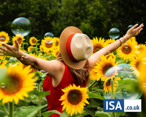 Best Ready Made ISA Portfolios - How To Pick One